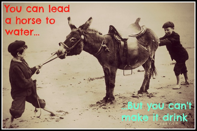 you can lead a horse to 'you can lead a horse to water but you can't make him drink' is a proverb which means that you can give someone an opportunity but not force them to take it i gave him the email address of the.